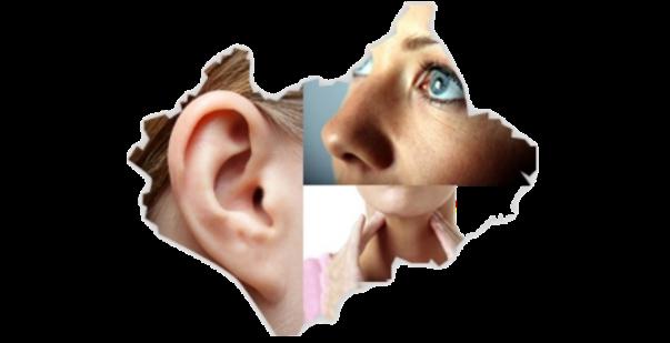 Dr ear nose throat